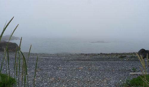 Kachemak Bay beach in fog