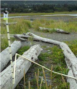 Diverse Beluga Slough berm plot surveyed on August 13, 2011