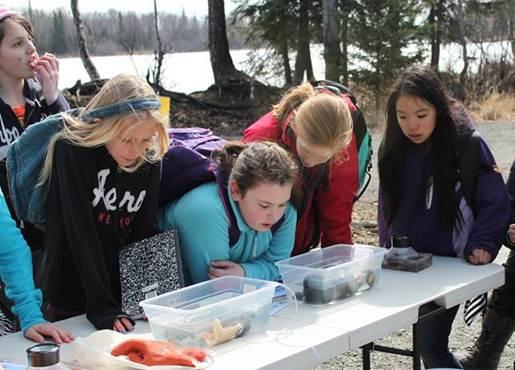 Students investigating marine invertebrates at Jess's Salmon Celebration station.