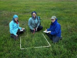 Angela Doroff and community monitors identifying salt marsh vegetation in study plots.